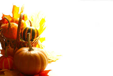 White background with pumpkins isolated №35287