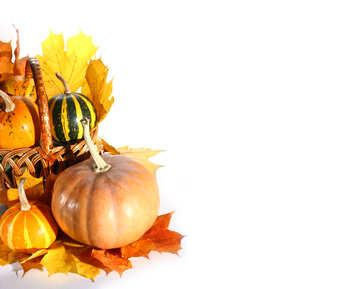 White background with pumpkins isolated №35298