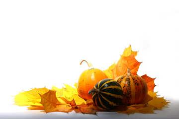Pumpkin №35459
