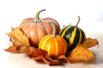 Beautiful pumpkin №35088