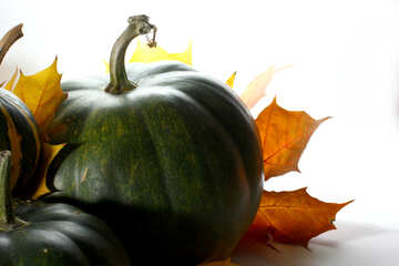 Green pumpkin №35470