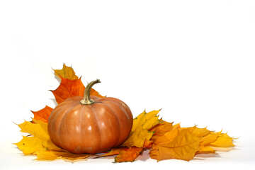 Pumpkin and leaves no background №35462