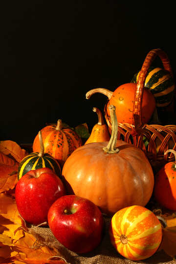 Autumn still life №35326