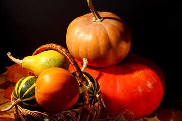Colori di autunno №35343
