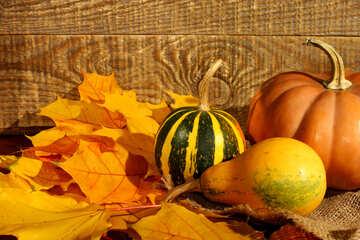 Imagen de calabazas y hojas de otoño №35419