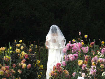 The bride in the flower garden №35807