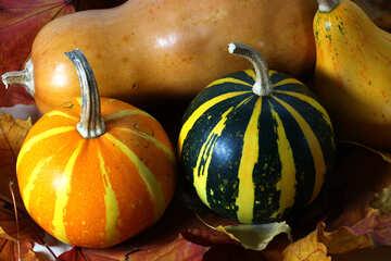 Pumpkin №35114