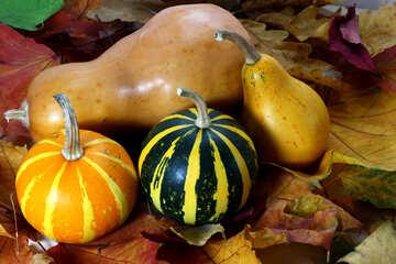 Pumpkin №35116