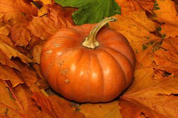 Pumpkin №35143