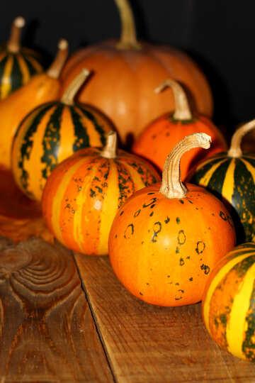 Pumpkin №35311