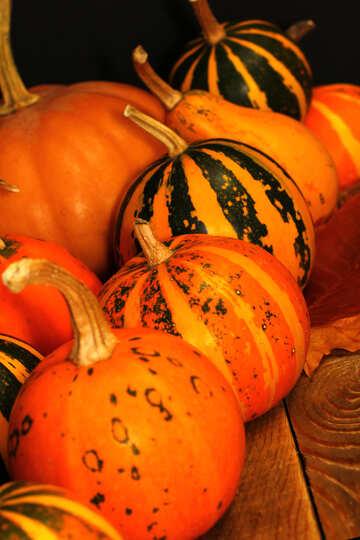 Pumpkin №35312