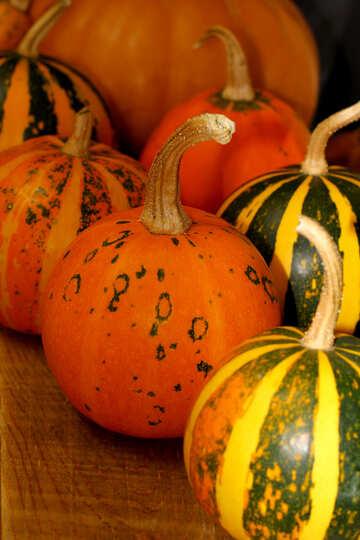 Pumpkin №35313