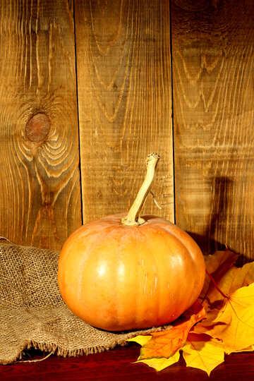 Pumpkin №35371