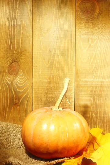 Pumpkin №35373