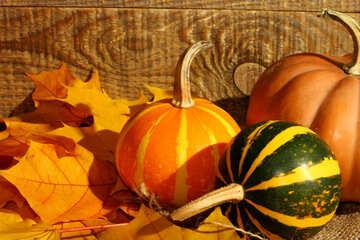 Pumpkin №35424