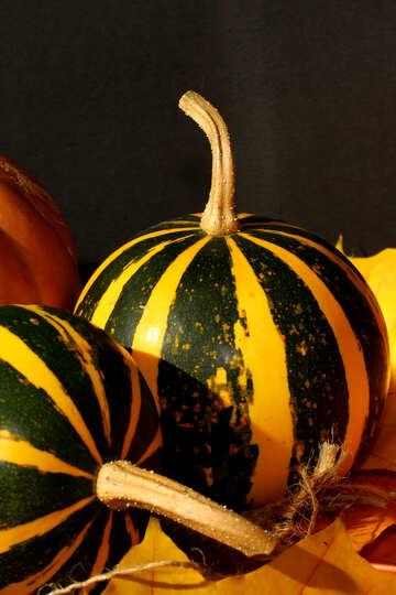 Pumpkin №35429