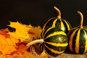 Pumpkin №35432