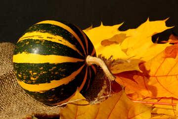 Pumpkin №35434