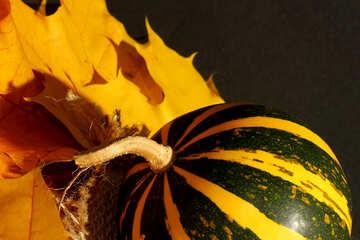 Pumpkin №35437