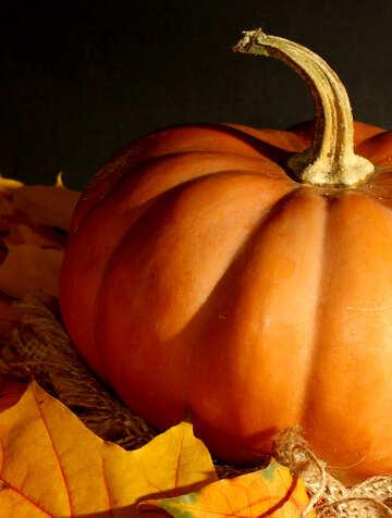 Pumpkin №35446