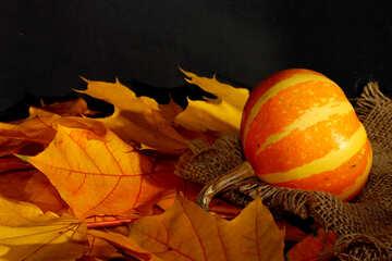 Pumpkin №35449