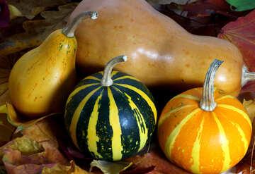 Pumpkin №35115