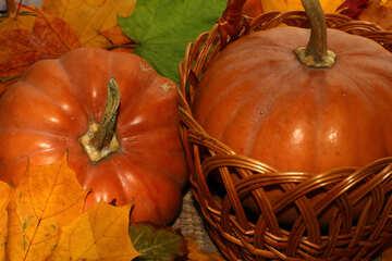 Pumpkin №35146