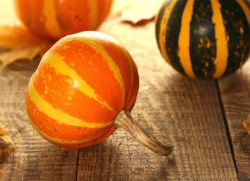 Decorative pumpkins №35258