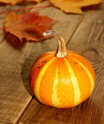 Little pumpkin on the table №35206