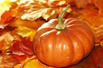 Orange pumpkin on fallen leaves №35274