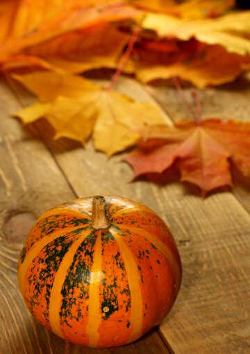 Picture with pumpkins for vertical desktop №35200