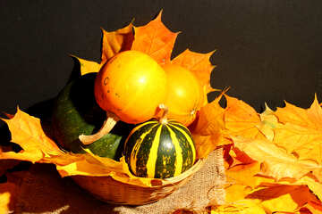 Small pumpkin №35360