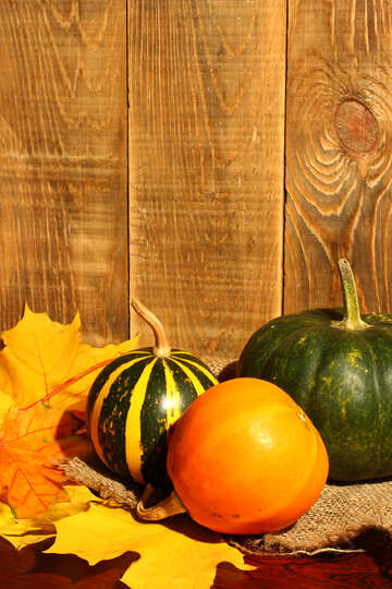 Pumpkin on background of wooden boards №35365