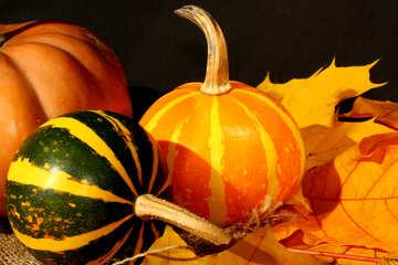 Beautiful pumpkin №35428