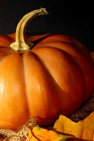 Big pumpkin №35445