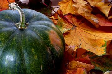 Big pumpkin and leaves №35118