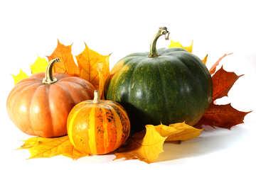 Pumpkin isolated №35480