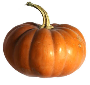 Pumpkin isolated on white background №35625