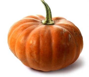 Pumpkin in isolation №35004