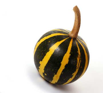 Little pumpkin in isolation №35020