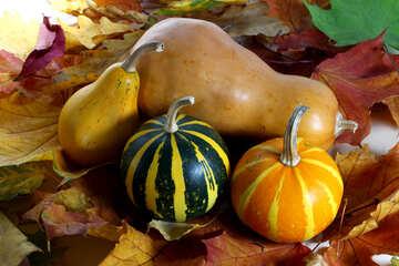 Pumpkin on leaves №35113