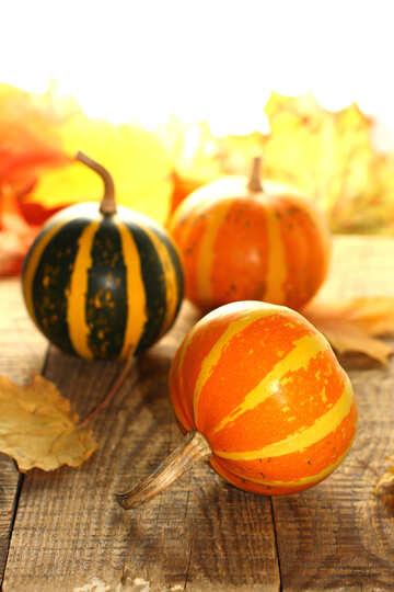 Small pumpkin №35257