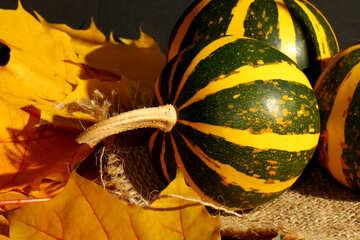 Striped pumpkins №35433