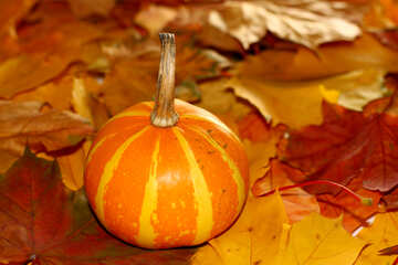 Striped yellow pumpkin №35276