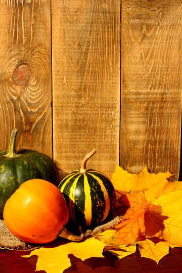 Background with pumpkins with space for writing №35363
