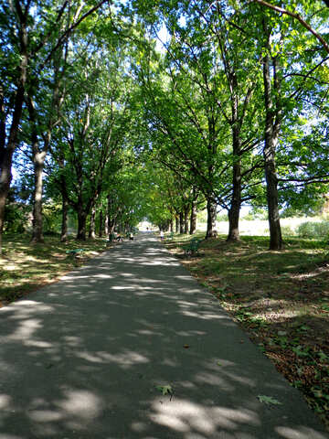 The road in the Park №35889