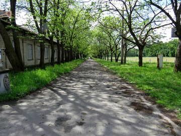 Die Straße zum Park entlang dem Zaun №35642