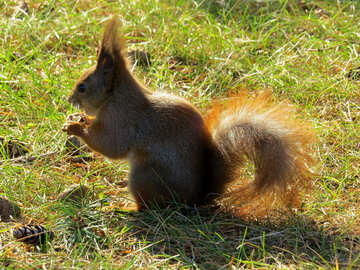 Squirrel eating №35690