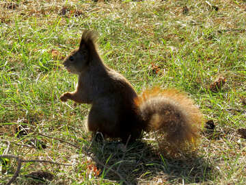 Squirrel №35687