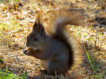 Beautiful squirrel №35673